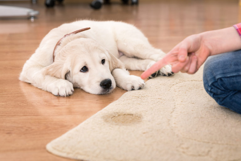How to Get Rid of Pesky Pet Stains